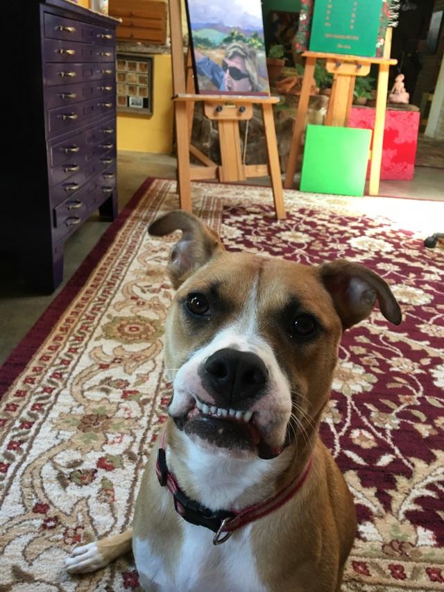 Bess teeth