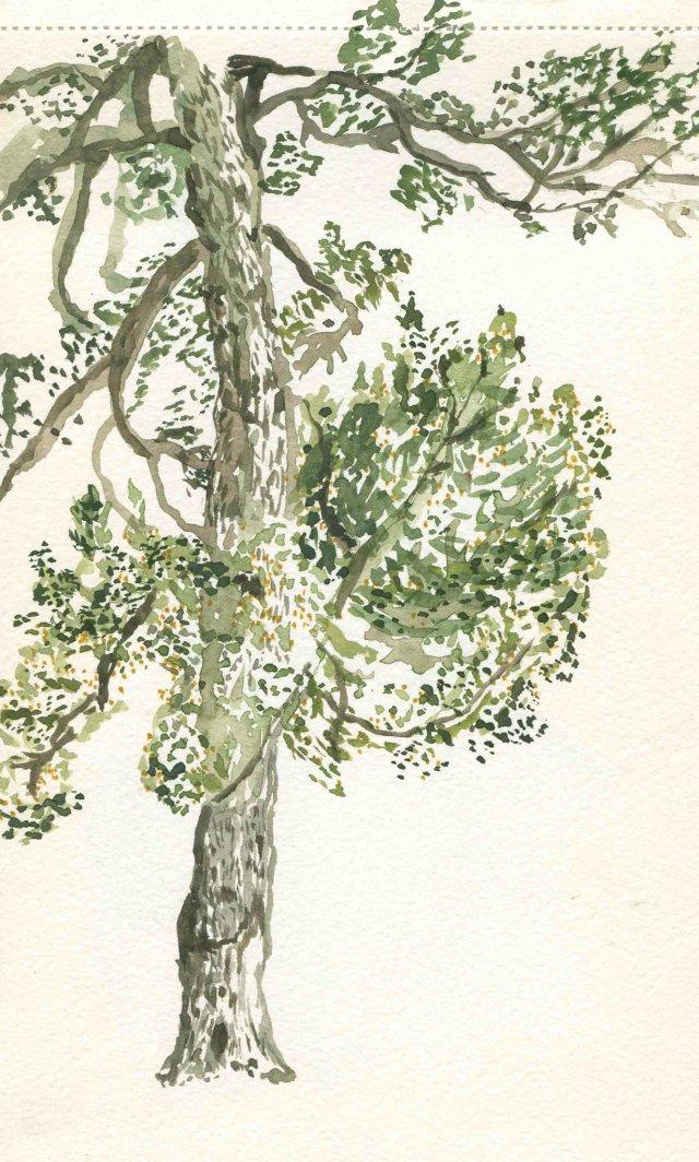 tree by sarah