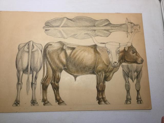 xTom Jones. Steer